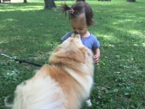 Dog Kisses