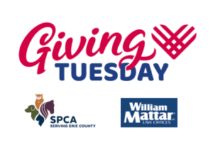 Giving Tuesday William Mattar and SPCA
