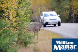 deer crossing road in front of a car